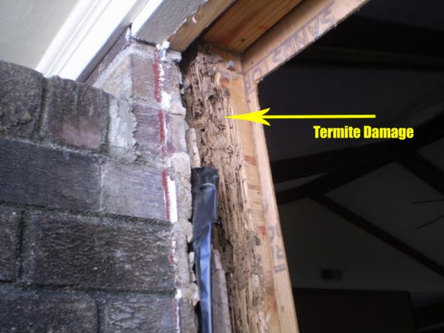 charleston home inspection reveals termite damage | Blue ...