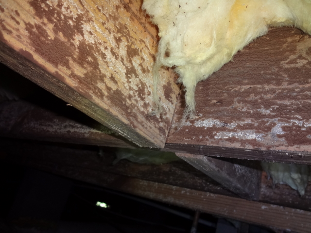 Ladson Home Inspector Discusses Apparent Mold Growth